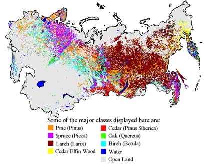 Commerically viable trees in Russia's boreal forests.